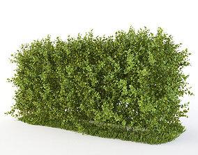 3D model Hedge of bushes