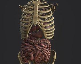 Anatomy skeleton pelvis spinal column human 3D asset 3