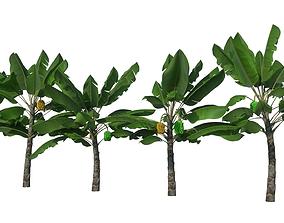 3D Banana tree - Bananeira