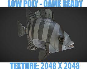 3D asset Fishes 02