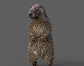 Marmot 3D