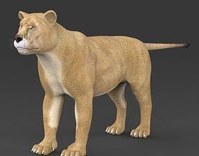 Realistic Lioness 3D
