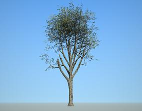 3D asset Broadleaf 006