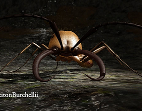3D Ant EcitonBurchellii