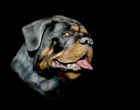 sculptures 3D printable model rottweiler head