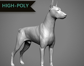 Doberman High-Poly 3D printable model