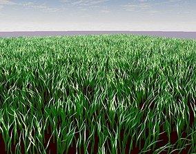 3D model Grass scene with blue sky