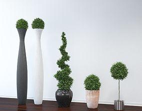 3D model VP Boxwood Trees