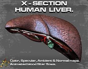 Cross Section Human Liver 3D asset