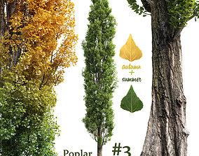 Poplar Populus nigra V1 3D