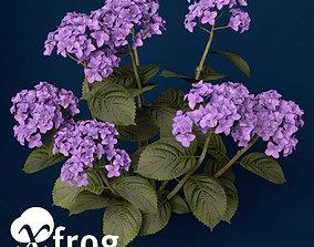 3D model XfrogPlants Hortensia