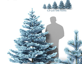 3D model Low blue spruce