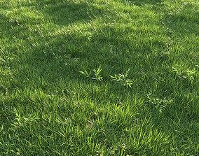 3D Grass summer