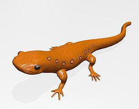 Eastern Newt 3D model