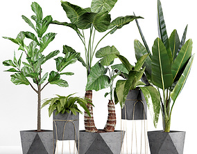 3D Plants collection 07