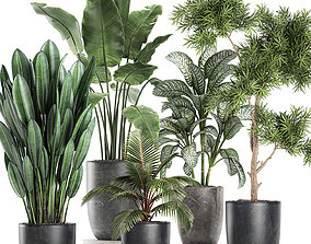 Collection of decorative plants in flowerpots 756 3D model
