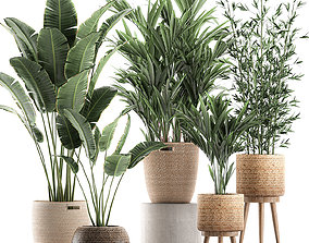 3D model Plants in baskets for the interior 600