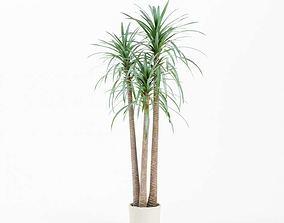 Large Potted Plant 3D model