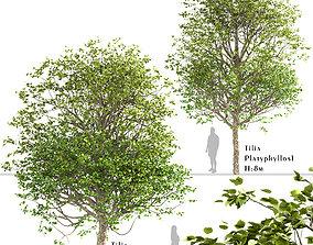 3D Set of Tilia Platyphyllos or Large-Leaved Linden Trees