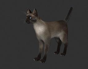 Siamese Cat 3D asset