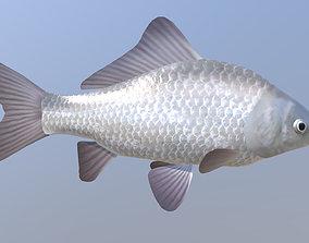 Carassius silver 3D model