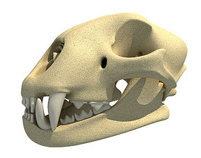 3D Cheetah Skull - Animal Skull