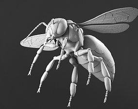 Honey bee 3D closeup