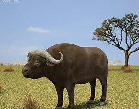 3D model African Buffalo Syncerus Caffer
