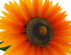 Sunflower 3D model