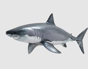 3D asset SHARK sea