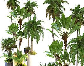 3D model Halm trees 03