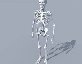 people Skeleton 3D model