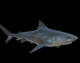 Tiger Shark 3D asset
