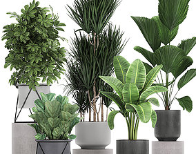 Collection of decorative plants in flowerpots 772 3D model