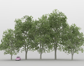 3D model Elm Tree Pack 01