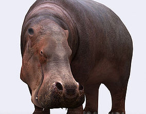 animated 3DRT - Hippopotamus