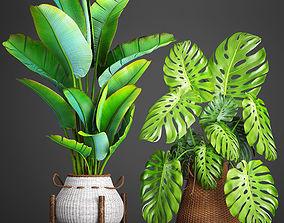 Collection plants 41 3D model