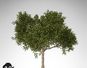 XfrogPlants Avocado tree 3D