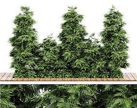 Slender Hinoki Cypress Tree Narrow Trees for 3D model 1