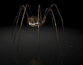 Insect Collection17 Opiliones 3D asset