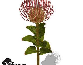 XfrogPlants Nodding Pincushion 3D model