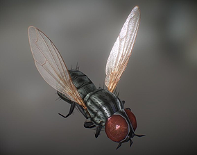 Animated Housefly 3D model