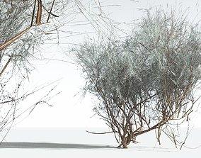 EVERYPlant Big Sagebrush LowPoly 01 --10 Models-- 3D asset