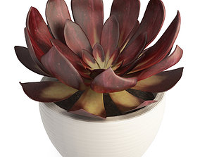 3D model Interior Succulent Plant Echeveria