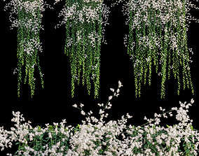 3D model Vernonia Elliptica - Curtain Creeper 05