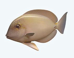 3D Anglefish 10