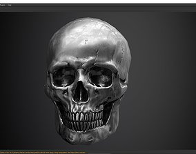 3D model skull PBR textures and low poly and high poly
