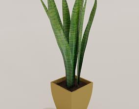 Sansevieria plant 3D model