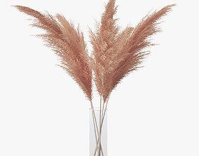 3D Pampas grass 02