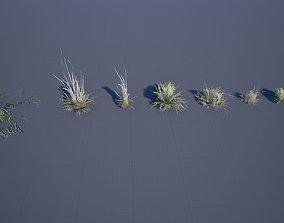 3D model Desert Grass